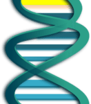 Modified Gene