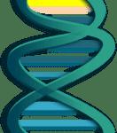 Modified Gene