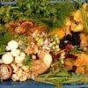 Wild Foods In Our Region